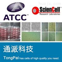 CoLo-TC细胞人结肠癌细胞